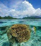 Над нижними кораллом и рыбами острова в Тихом океане лагуны Стоковые Фото
