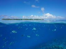 Над нижним островом поверхности моря и тропическими рыбами Стоковые Изображения