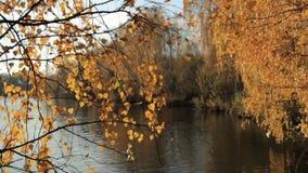 На озере леса осенью сток-видео