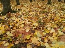 на октября Стоковая Фотография