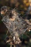 На лоскутном одеяле паука Стоковые Фото