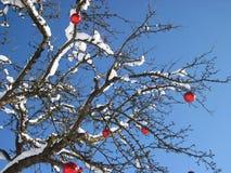 На открытом воздухе украшенная рождественская елка со снегом стоковая фотография rf