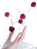 На одной руке, вишни в воде изолированной на белизне Стоковое Фото