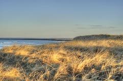 На песчанных дюнах стоковое изображение