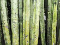 Надписи кактуса Стоковые Фото