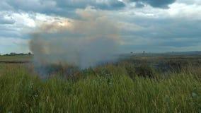 На поле с пшеницей ожога огня акции видеоматериалы