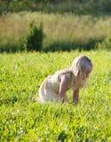 На поле стоковое фото rf