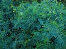 На природе, на папоротнике зеленого цвета травы луга с цветками Стоковые Изображения
