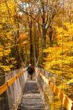 На прогулке сени Стоковое Фото