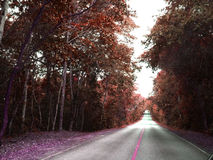 На путе… Стоковые Фото