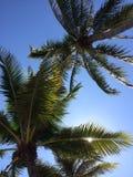 Над пляжем Стоковое фото RF