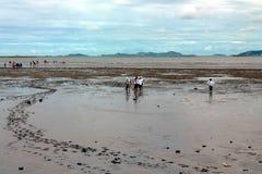 На пляже во время отлива Стоковые Фотографии RF