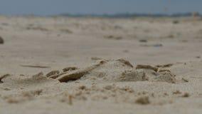 На пляже Стоковая Фотография