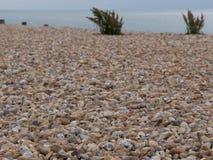 На пляже Стоковая Фотография RF
