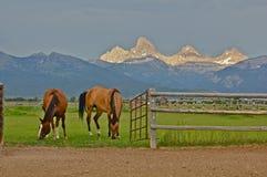 На ранчо Стоковые Фотографии RF
