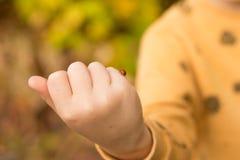 На ребенке ручка проползает красный, запятнанный в белизне, ladybug, хочет принимать  стоковые фотографии rf