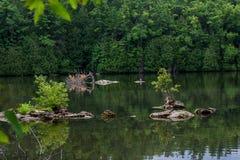 На спокойном реке Eramosa в парке Rockwood Стоковое Фото