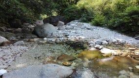 На стороне реки в природе стоковые фото