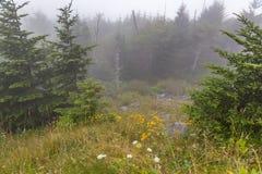 над туманом Стоковые Изображения