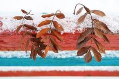 На фоне пестротканых деревянных предкрылков обнаруженные местонахождение сухие упаденные листья золы горы, зимы и цветов снега во Стоковые Изображения RF