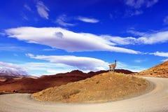 На холме довольно фантастичное гуанако Стоковая Фотография