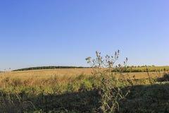 На холме Стоковые Фотографии RF