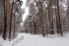 На черных ветвях дерева лежит толстый слой lo снега Стоковая Фотография