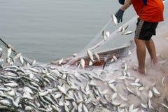 На шлюпке рыболова, улавливая много рыб стоковые изображения