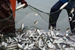 На шлюпке рыболова, улавливая много рыб стоковая фотография