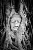 на Ayutthaya, Стоковые Изображения