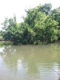 На The Creek Стоковые Фото