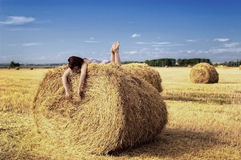 На haystack стоковые изображения rf