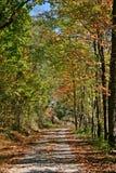 неба освещения папоротника буков осени тропка пасмурного мягкая очень Стоковое Изображение