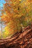 неба освещения папоротника буков осени тропка пасмурного мягкая очень Стоковое Изображение RF
