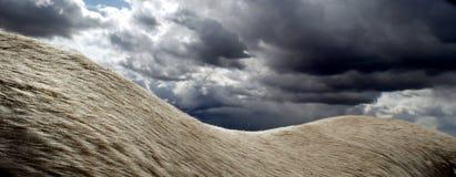 Небеса Horseack Стоковые Фото