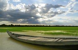 Небесное поле риса Стоковое Фото
