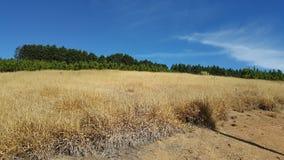 Небесно-голубой Стоковая Фотография RF
