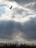 небесные лучи Стоковые Фото