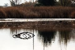 Небольшая ветвь вставляя из тишины, красивый пруд стоковые изображения
