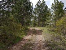 Небольшая дорога следа в красивом лесе в утре стоковое изображение rf