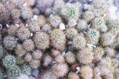 Небольшая предпосылка кактуса, крупный план взгляда сверху стоковые фото