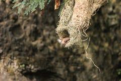 небольшая птица получая готовый принять муху от гнезда стоковые фотографии rf