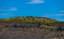 Небольшая роща Aspen доказывая осень приходит стоковая фотография rf