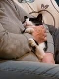 Небольшие объятия кота постарели руки женщины petting она стоковые изображения rf