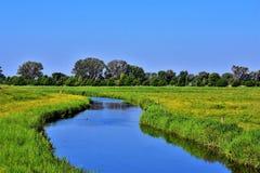 Небольшие река и поля с зеленой травой, желтыми одуванчиками и деревьями стоковое изображение