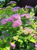 небольшие розовые цветки в саде стоковая фотография rf