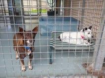 Небольшие собаки приюта для бездомных в клетке на принятии фунта ждать стоковые изображения rf