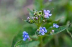 Небольшие цветки на крупном плане предпосылки стоковое изображение