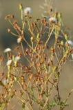 Небольшие цветки, одуванчики красивая винтажная предпосылка, освещение природы солнечное стоковая фотография rf