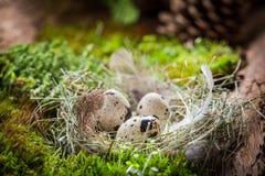 Небольшие яйца для пасхи на мхе в лесе стоковые фото